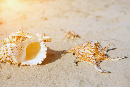 Seashell on sand background. Beach or sea coast. Sunny and bright. Banco de Imagens
