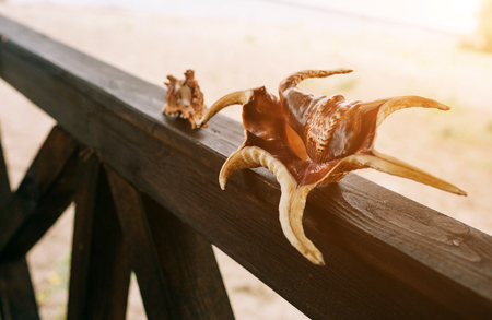 Two seashells on the background of beach and sea. They stand on wooden piece.