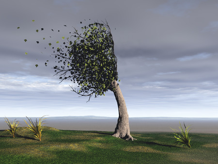 windswept: Windswept tree