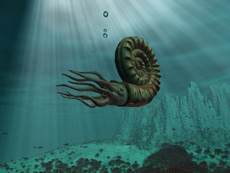 Ammonite at sea Stock Photo
