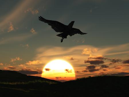 석양을 날고있는 독수리
