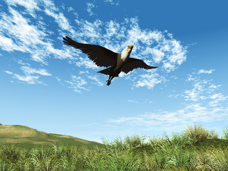 3d illustration of a flying eagle