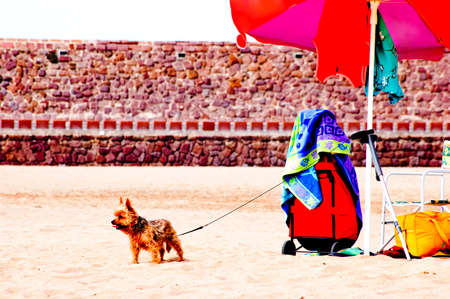 Dog at a beach in Sardinia Stock Photo