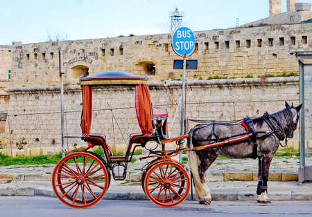 Horse with carriage at bus stop in Malta