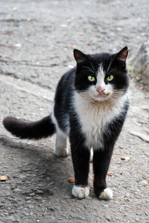 Stray cat, Yalta, Crimea