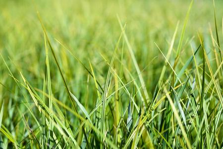 Grass Standard-Bild