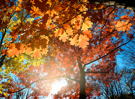Colorful and bright autumn leaves and blue sky background 免版税图像