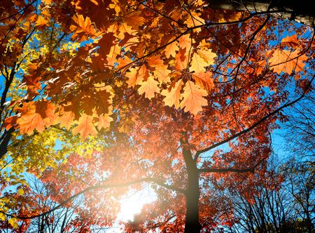 hojas secas: Hojas de oto�o coloridas y brillantes y cielo azul de fondo Foto de archivo