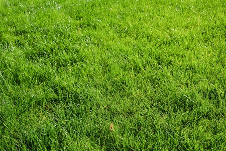 Bright green grass background. Fresh green grass field. Green grass texture for print, web use, posters and banners Standard-Bild - 110801157