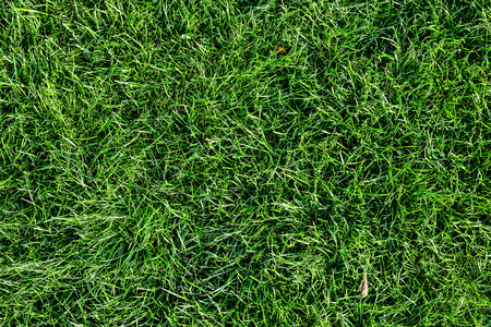 Bright green grass background. Fresh green grass field. Top view. Green grass texture for print, web use, posters and banners Standard-Bild - 110801161