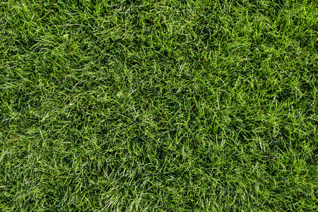 Bright green grass background. Fresh green grass field. Top view. Green grass texture for print, web use, posters and banners Standard-Bild - 110801162