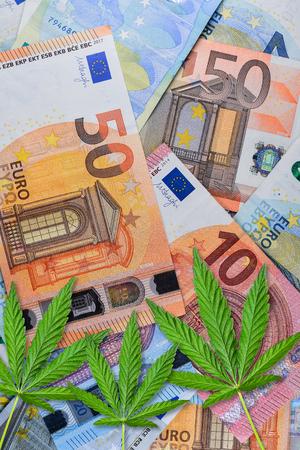 Close up of Marijuana on money. Cannabis or hemp leaves on a euro money background. Flat lay. Template or mock up. Фото со стока