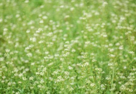 Blooming spring meadow or field. Tender spring background