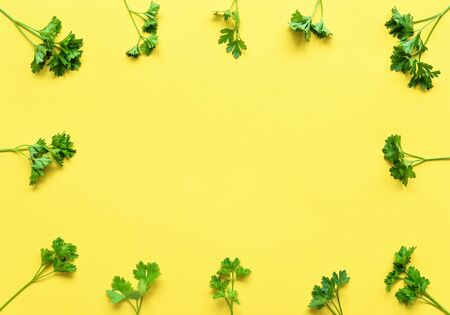 Parsley isolated. Frame of parsley on a yellow background. Juicy bright green parsley leaves. Herbs flat lay, top view. Leaves frame Stock fotó