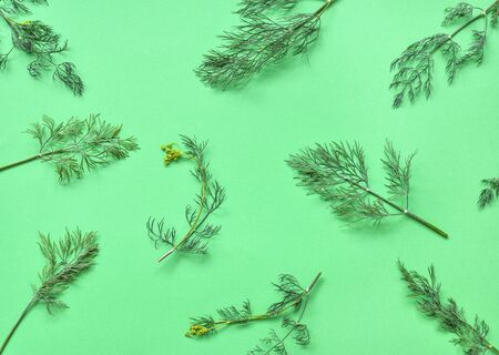 Dill isolated. Pattern of dill on a green background. Juicy bright green dill leaves. Herbs flat lay, top view.