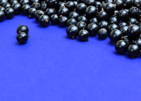 Black currant berries macro photo. Top view. Black currant on navy blue background. Summer berries.