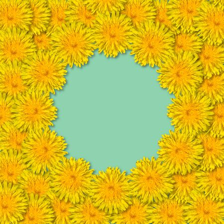 Yellow flowers arranged in a frame isolated on blue or mint background. Floral frame from dandelions. Copy space.