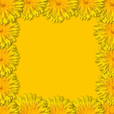 Yellow flowers arranged in a square frame on yellow background. Floral frame from dandelions. Copy space. Monochrome.