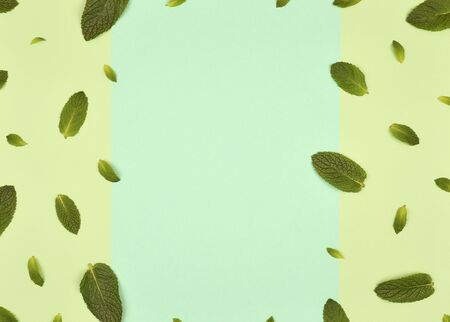 Texture or pattern with ?int leaves isolated on mint background. Set of peppermint leaves. Mint Pattern. Flat lay. Top view. Copy space