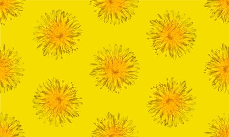 Seamless yellow flower pattern on yellow background. Dandelion flower summer background close up.