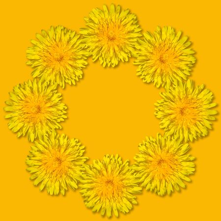 Yellow flowers arranged in a round frame isolated on yellow background. Floral frame from dandelions. Copy space. Monochrome. Stock Photo