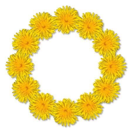 Yellow flowers arranged in a round frame isolated on white background. Floral frame from dandelions. Copy space.