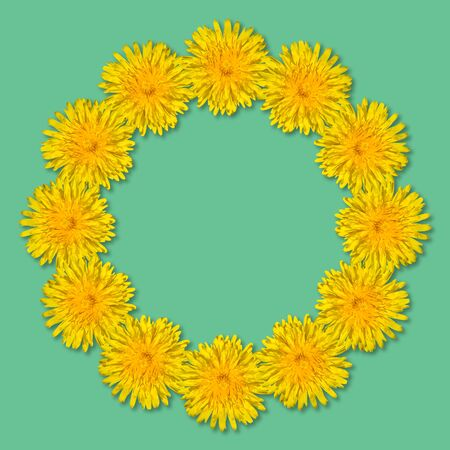 Yellow flowers arranged in a round frame isolated on blue or mint background. Floral frame from dandelions. Copy space.