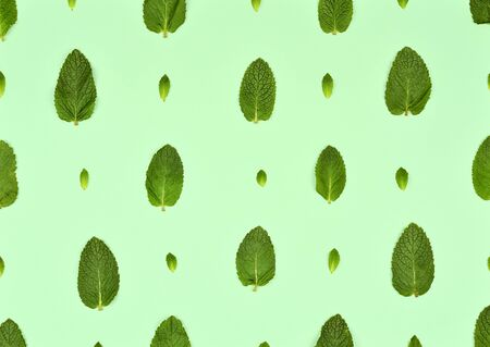Pattern with mint leaves isolated on mint background. Set of peppermint leaves. Mint leaf Pattern. Flat lay. Top view.