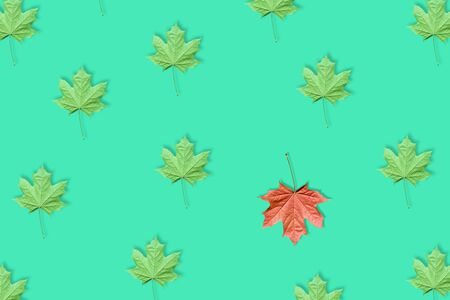 Unique red maple leaf among many green maple leaves pattern isolated on blue or mint background. Pop art design, creative fall concept. Standing out from crowd, individuality and difference concept. Stock Photo