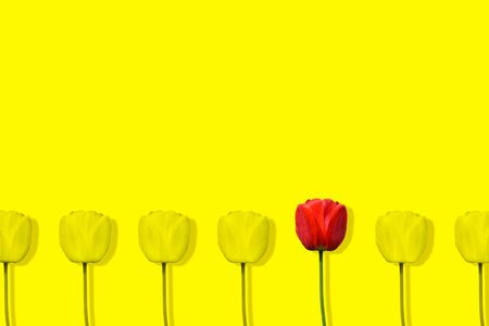 Unique red tulip among many yellow tulips isolated on yellow background. Pop art design, creative summer concept. Standing out from crowd, individuality and difference concept. Copy space