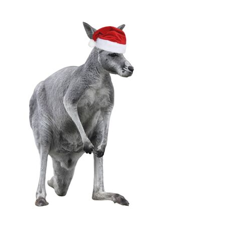 Male kangaroo in Christmas hat isolated on white background. Big kangaroo full lengths, front view. The kangaroo is a marsupial from the family Macropodidae. Stockfoto - 134272687