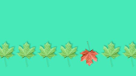 Unique red maple leaf among many green leaves isolated on blue or mint background. Pop art design, creative fall concept. Standing out from crowd, individuality and difference concept. Copy space