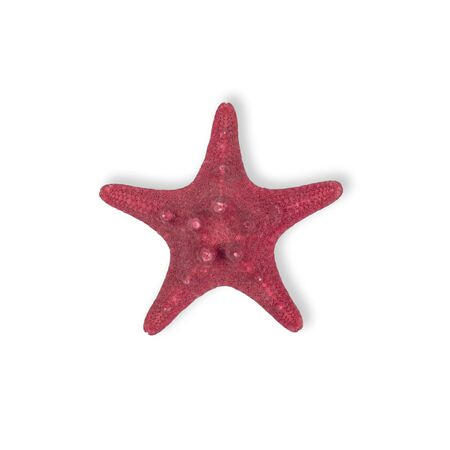 Dried Red sea star fish isolated on white background. Top view. Stock Photo