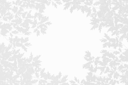 Fall or autumn banner. Gray shadow of magnolia tree leaves on white background. Abstract neutral nature concept blurred banner. Copy space. Overlay effect for photo.