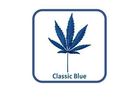 Dark blue Cannabis leaf isolated on white. Hemp leaf close up. Marijuana drugs is produced from Cannabis leaf. Banner with Cannabis leaf toned in blue