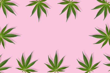 Hemp or cannabis leaves frame. Floral square frame made of cannabis leaves on pink background. Top view, flat lay. Template or mock up. Reklamní fotografie