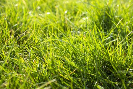 Side view on long and bright green grass texture. Green field with beautiful sun flare