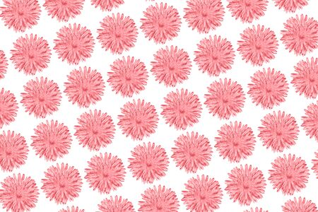Pink Chamomile or gerbera isolated on white diagonal pattern. Summer flowers