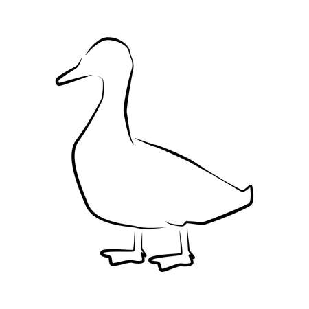 Duck outline simple icon. Farm water bird icon. 矢量图像