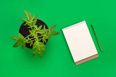 Hemp or cannabis plant in black flower pot and white modern blank notebook with copy space and green pencil. Top view flat lay banner. Business, office or education concept with copy space.