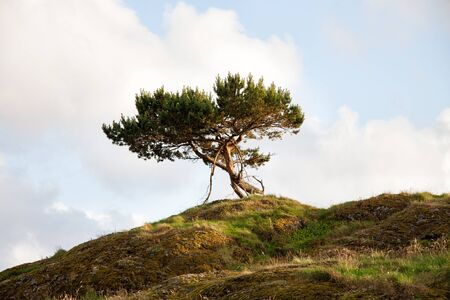 Lonley Tree On The Hill in Norway Bomlo Stock Photo