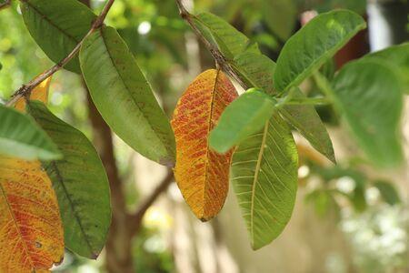 the Foliage