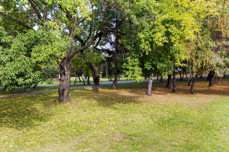 autumn city: Autumn city park
