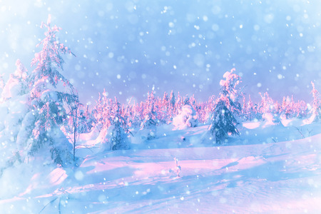 snowstorm: Snowstorm in the winter forest. Falling snow