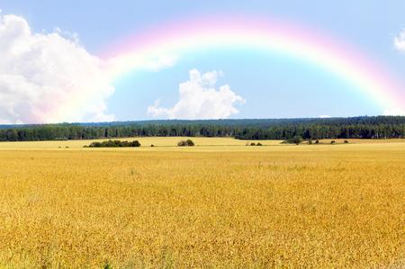 Wheat field and rainbow Stock Photo