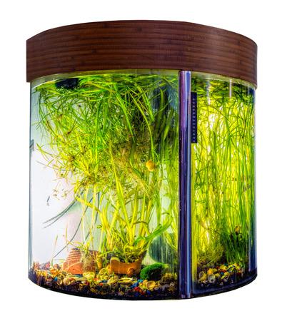 Beautiful semi-circular aquarium with tropical fish