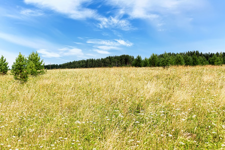 Green meadow blue sky with clouds and edge of forest Stock Photo