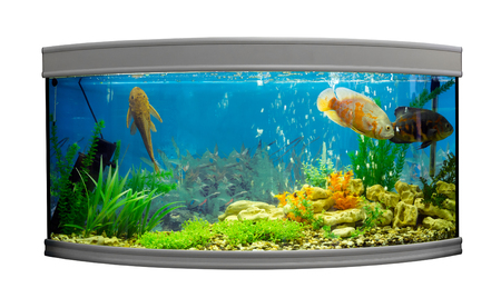 astronotus: Beautiful semi-circular aquarium with tropical fish on a white background Stock Photo