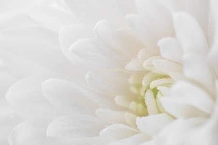Macro fleur blanche Banque d'images