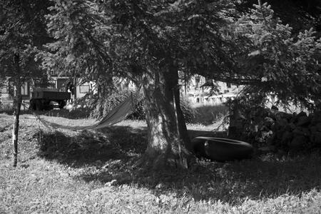 The hammock in the tree.